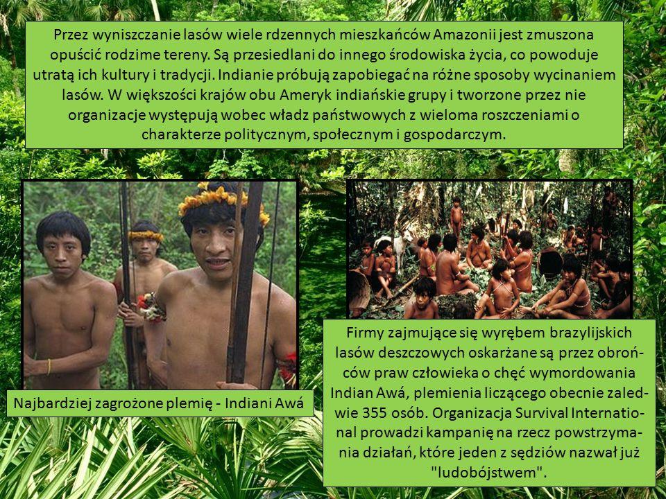 Przez wyniszczanie lasów wiele rdzennych mieszkańców Amazonii jest zmuszona opuścić rodzime tereny. Są przesiedlani do innego środowiska życia, co powoduje utratą ich kultury i tradycji. Indianie próbują zapobiegać na różne sposoby wycinaniem lasów. W większości krajów obu Ameryk indiańskie grupy i tworzone przez nie organizacje występują wobec władz państwowych z wieloma roszczeniami o charakterze politycznym, społecznym i gospodarczym.