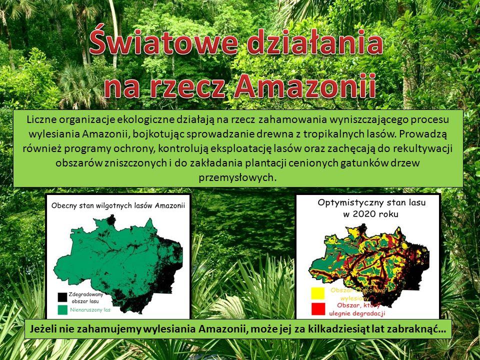 Światowe działania na rzecz Amazonii