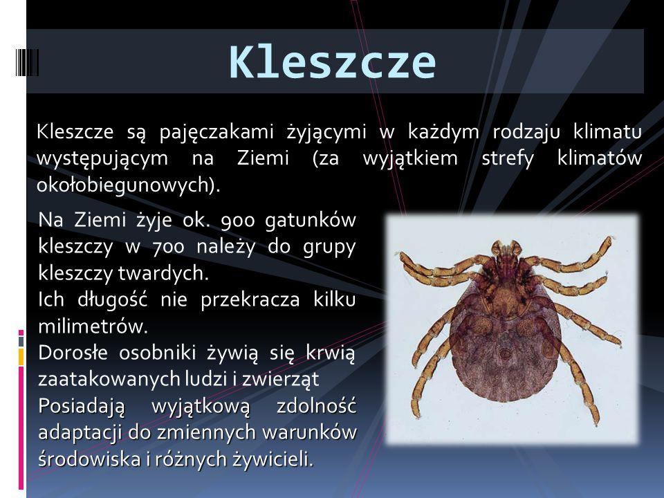 Kleszcze Kleszcze są pajęczakami żyjącymi w każdym rodzaju klimatu występującym na Ziemi (za wyjątkiem strefy klimatów okołobiegunowych).