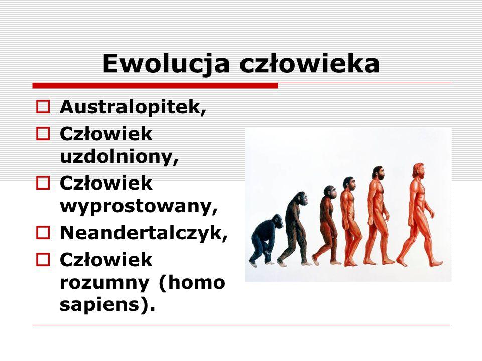 Ewolucja człowieka Australopitek, Człowiek uzdolniony,