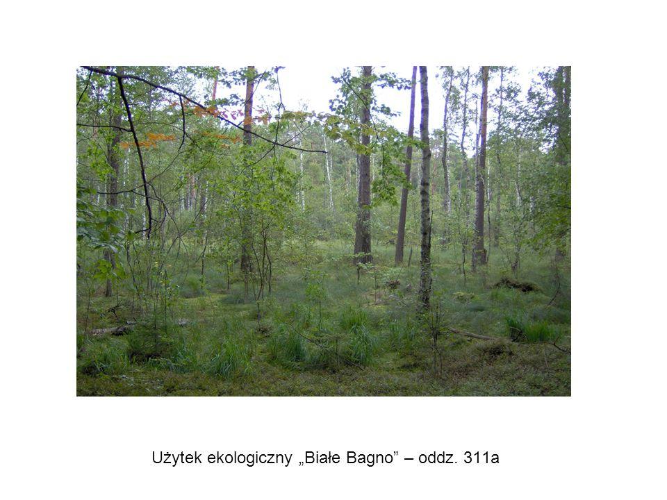 """Użytek ekologiczny """"Białe Bagno – oddz. 311a"""