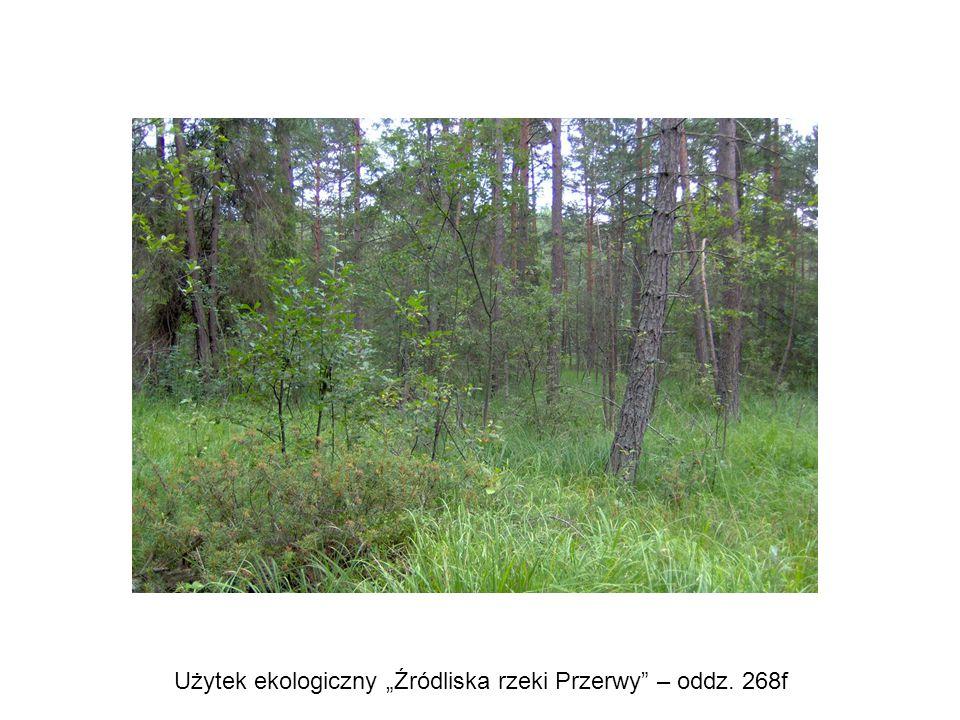 """Użytek ekologiczny """"Źródliska rzeki Przerwy – oddz. 268f"""