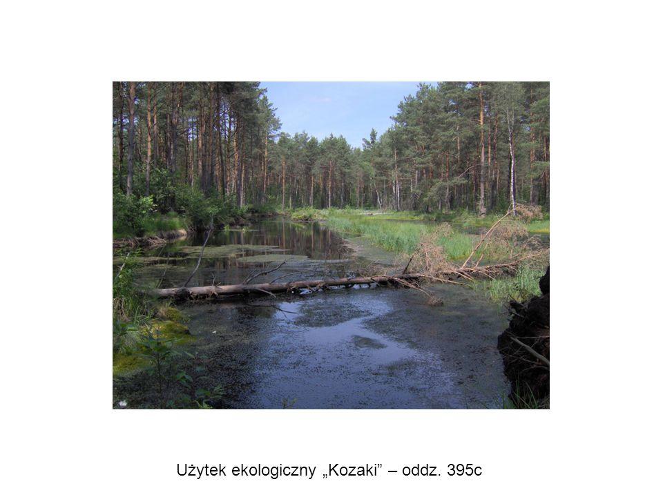 """Użytek ekologiczny """"Kozaki – oddz. 395c"""
