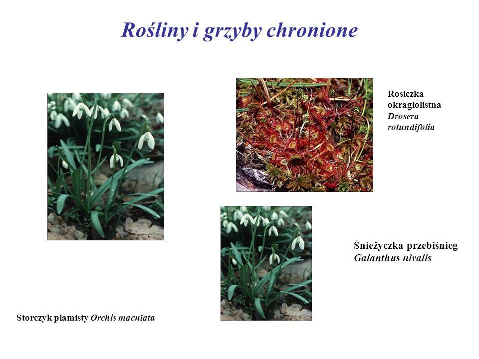 Rośliny i grzyby chronione