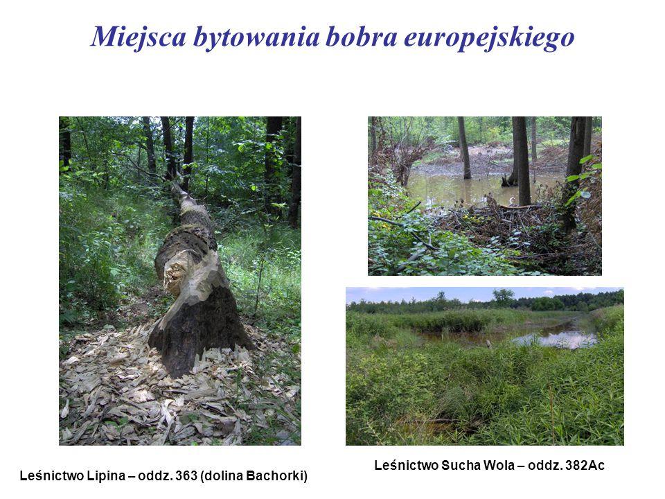 Miejsca bytowania bobra europejskiego