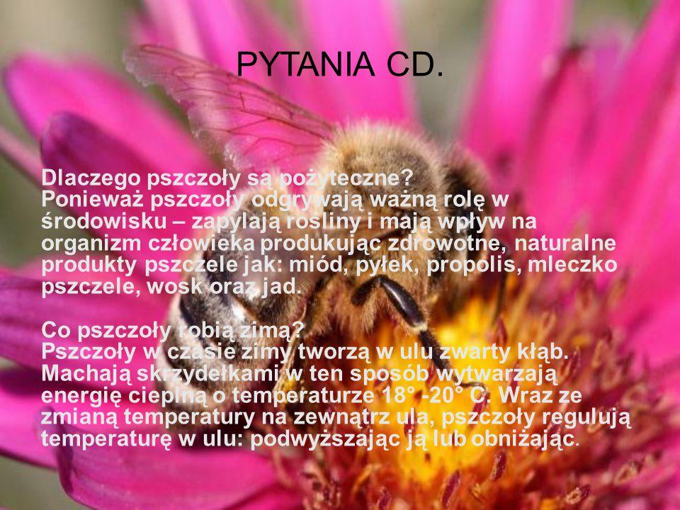 PYTANIA CD.