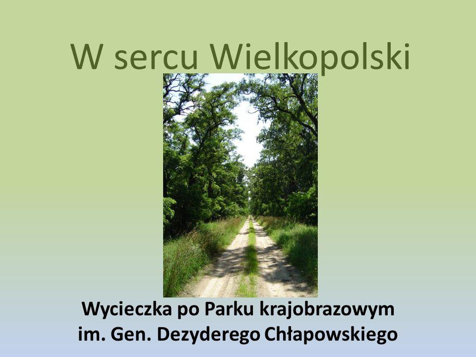 Wycieczka po Parku krajobrazowym im. Gen. Dezyderego Chłapowskiego