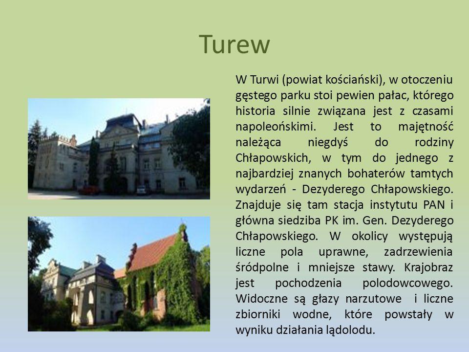 Turew
