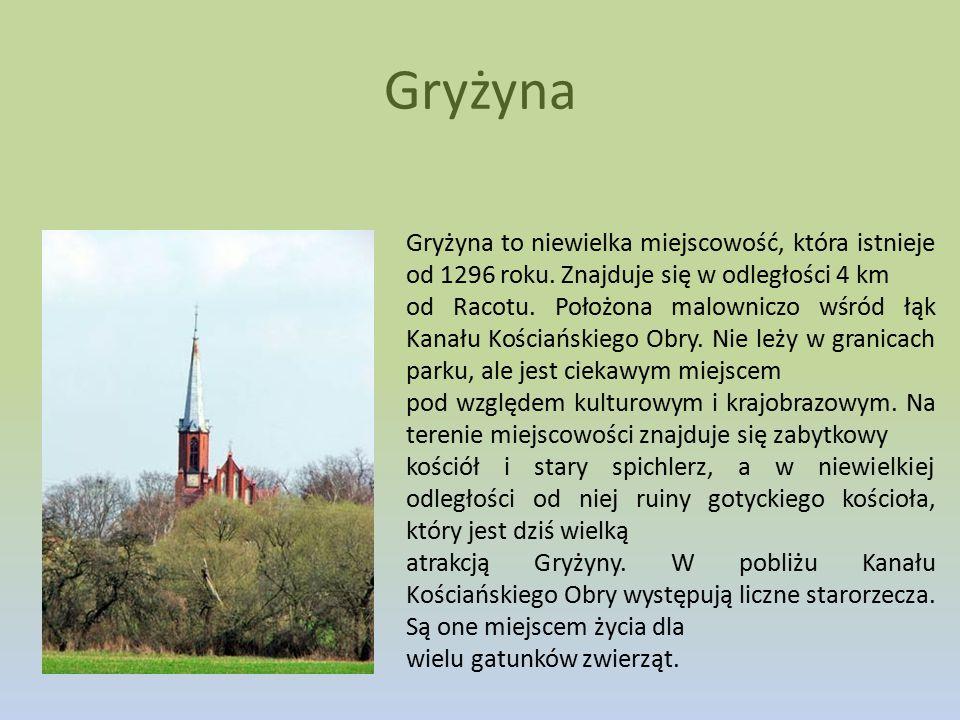 Gryżyna Gryżyna to niewielka miejscowość, która istnieje od 1296 roku. Znajduje się w odległości 4 km.