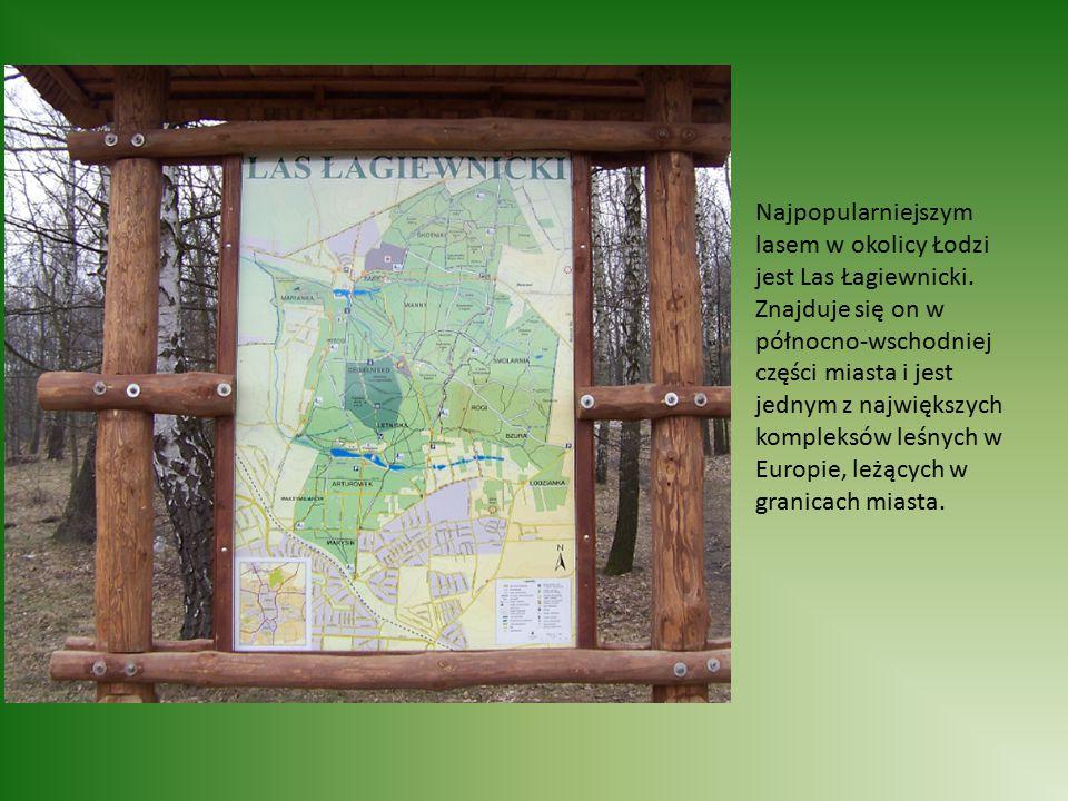 Najpopularniejszym lasem w okolicy Łodzi jest Las Łagiewnicki.