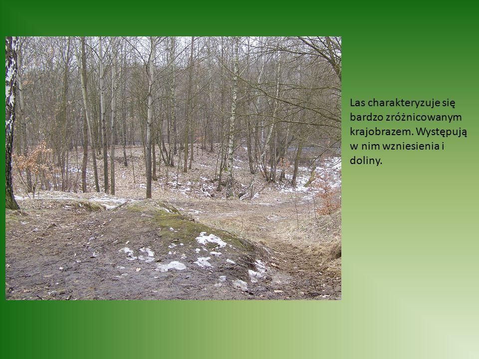 Las charakteryzuje się bardzo zróżnicowanym krajobrazem