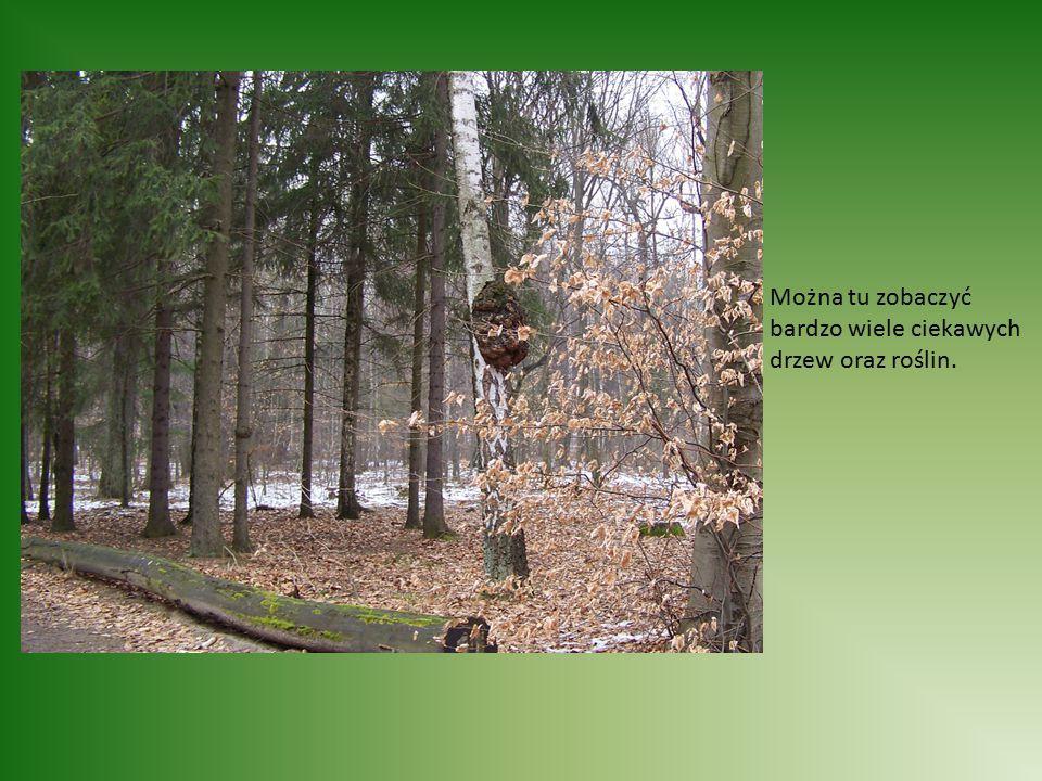 Można tu zobaczyć bardzo wiele ciekawych drzew oraz roślin.