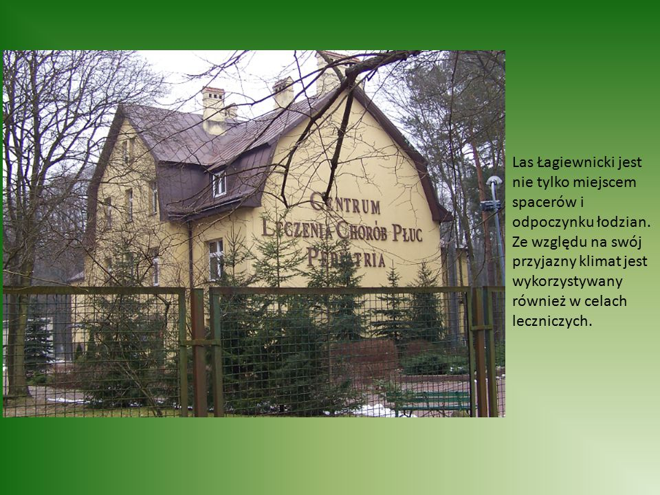 Las Łagiewnicki jest nie tylko miejscem spacerów i odpoczynku łodzian