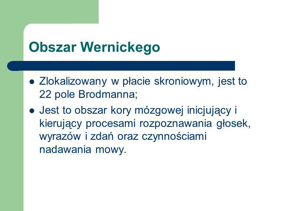 Obszar Wernickego Zlokalizowany w płacie skroniowym, jest to 22 pole Brodmanna;
