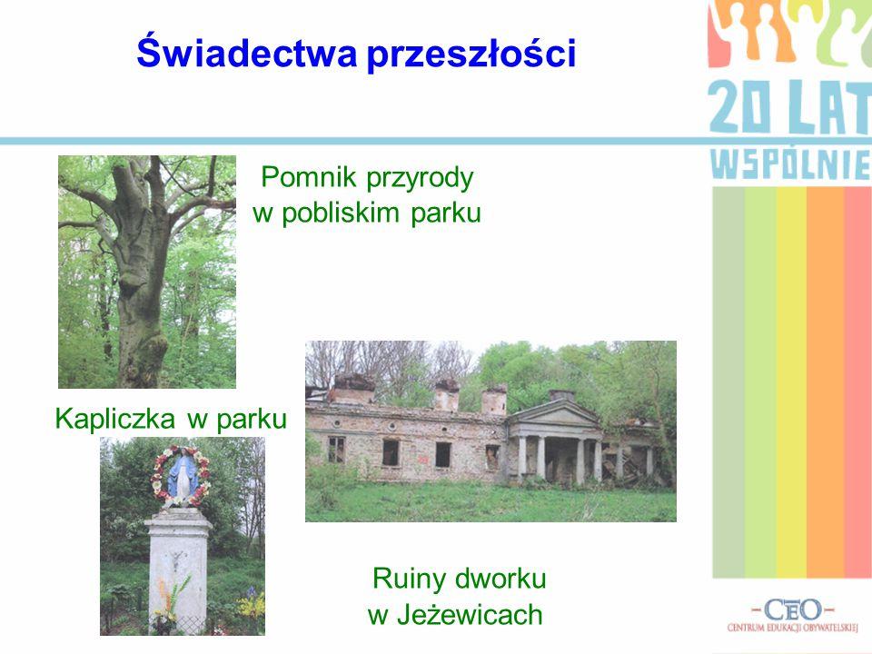 Pomnik przyrody w pobliskim parku