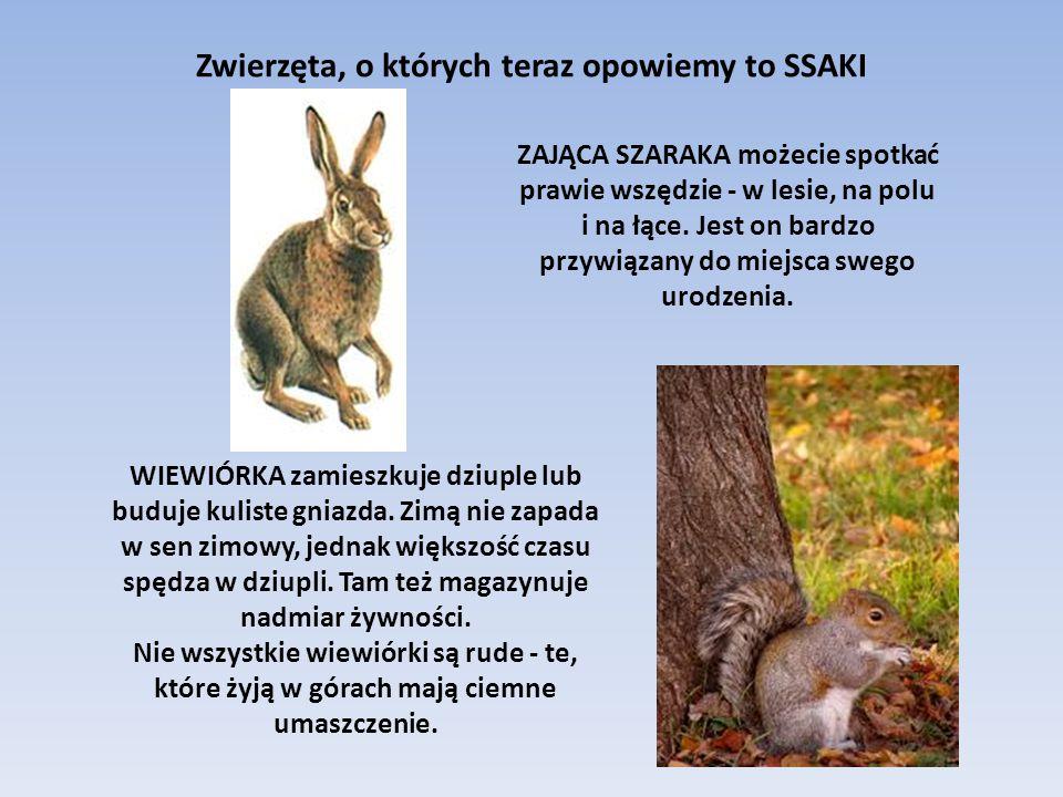 Zwierzęta, o których teraz opowiemy to SSAKI