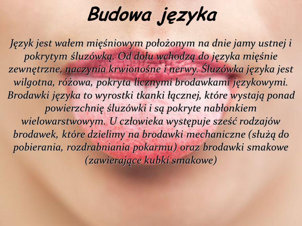 Budowa języka