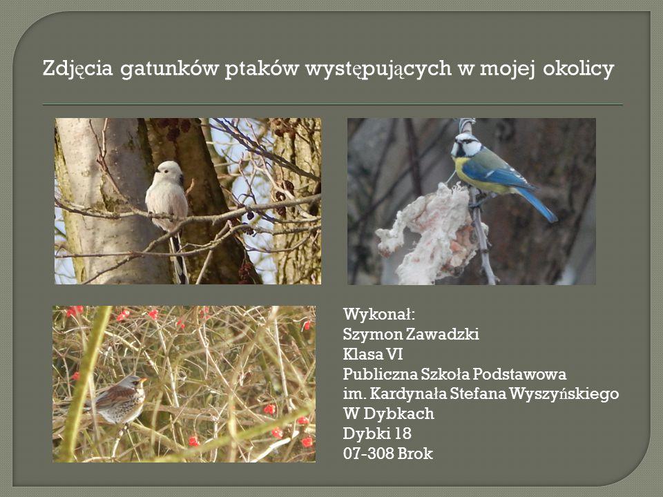 Zdjęcia gatunków ptaków występujących w mojej okolicy
