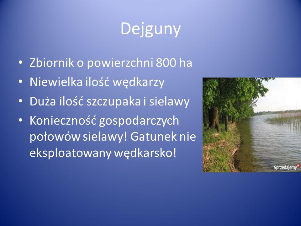 Dejguny Zbiornik o powierzchni 800 ha Niewielka ilość wędkarzy