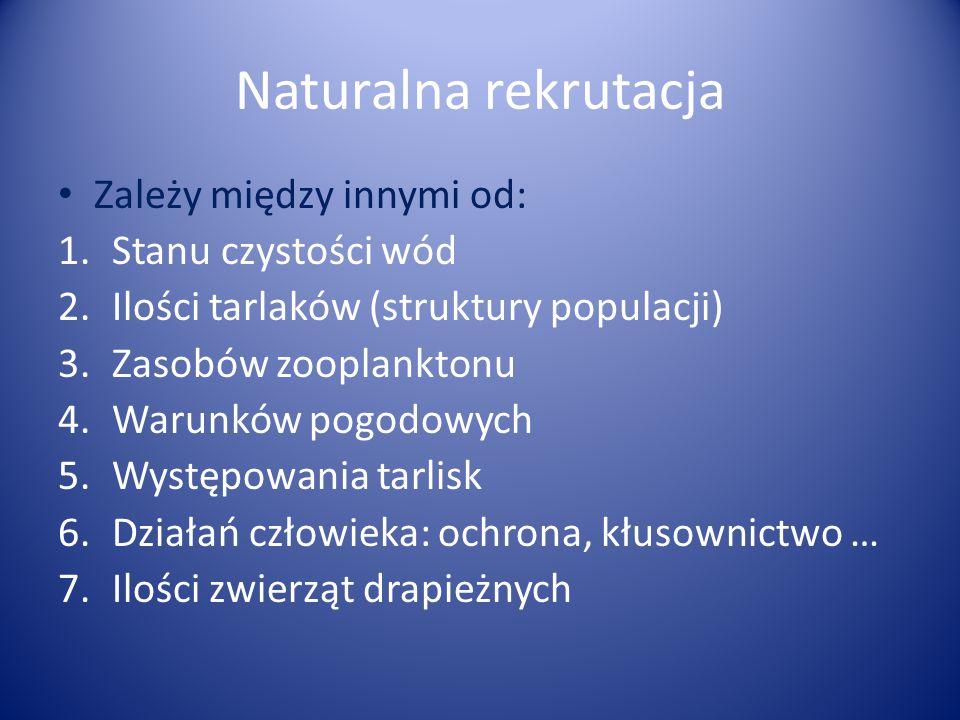 Naturalna rekrutacja Zależy między innymi od: Stanu czystości wód
