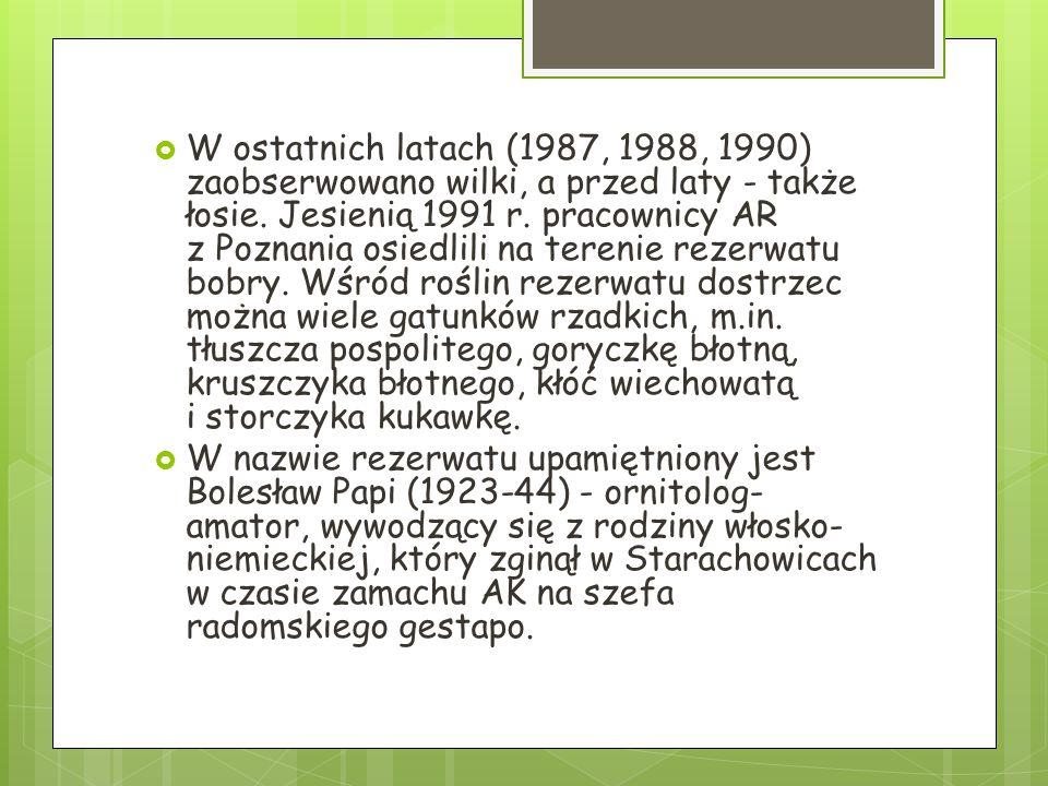 W ostatnich latach (1987, 1988, 1990) zaobserwowano wilki, a przed laty - także łosie. Jesienią 1991 r. pracownicy AR z Poznania osiedlili na terenie rezerwatu bobry. Wśród roślin rezerwatu dostrzec można wiele gatunków rzadkich, m.in. tłuszcza pospolitego, goryczkę błotną, kruszczyka błotnego, kłóć wiechowatą i storczyka kukawkę.