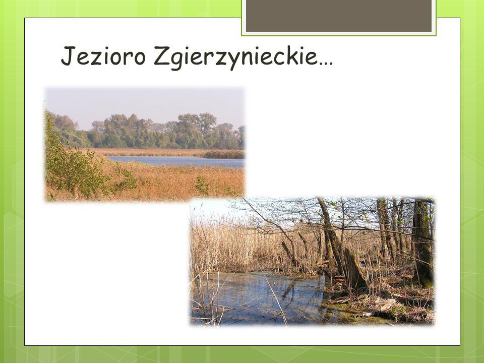 Jezioro Zgierzynieckie…