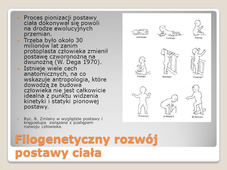 Filogenetyczny rozwój postawy ciała