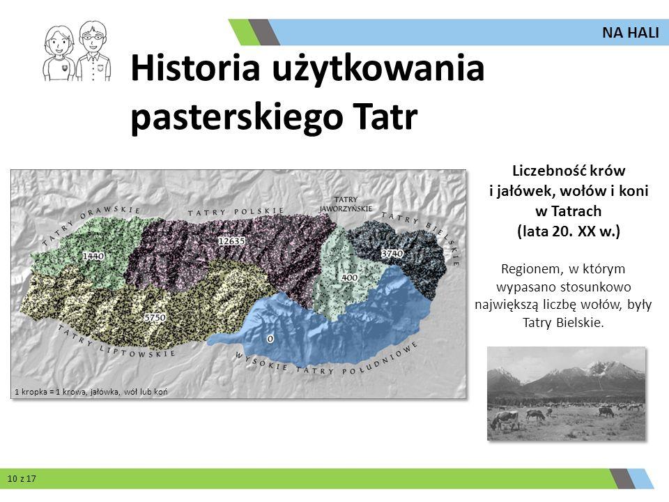 Liczebność krów i jałówek, wołów i koni w Tatrach (lata 20. XX w.)