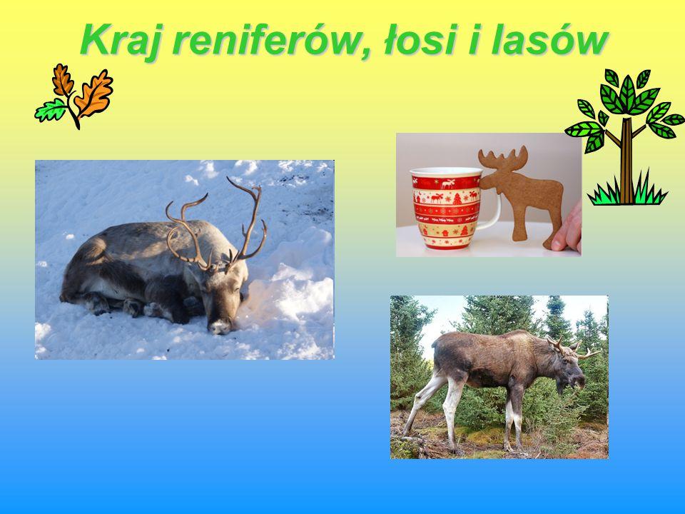 Kraj reniferów, łosi i lasów