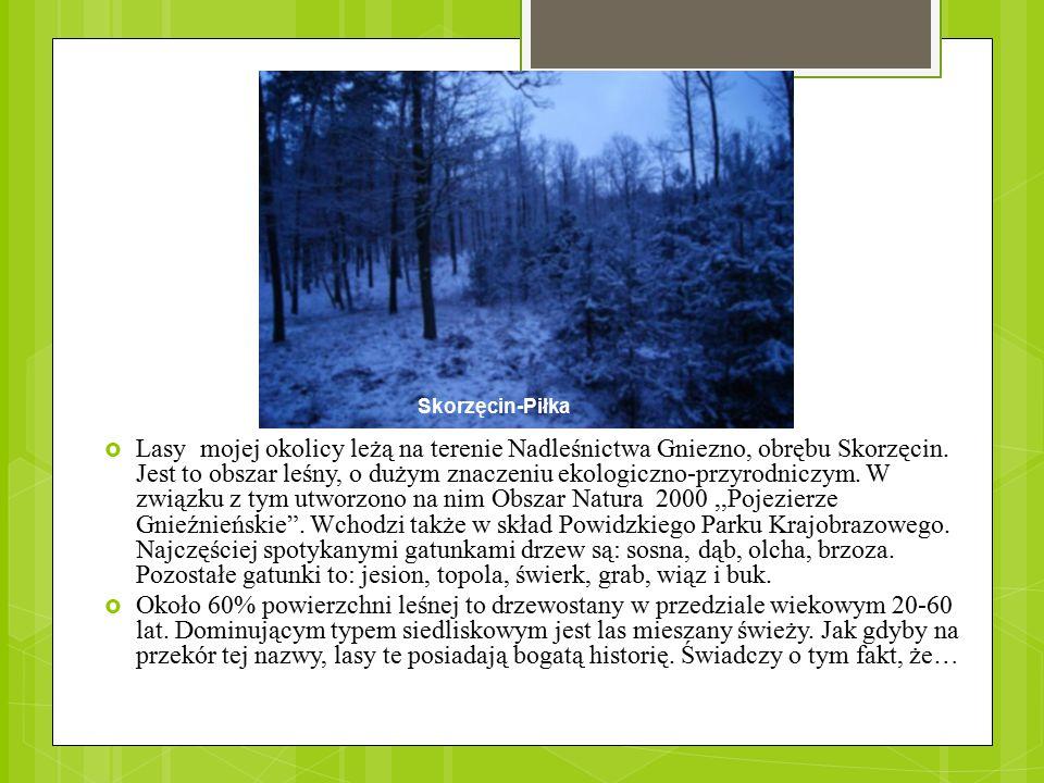 Skorzęcin-Piłka