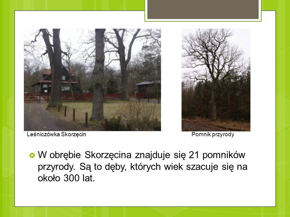 Leśniczówka Skorzęcin Pomnik przyrody