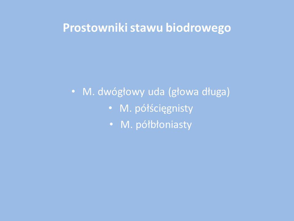 Prostowniki stawu biodrowego