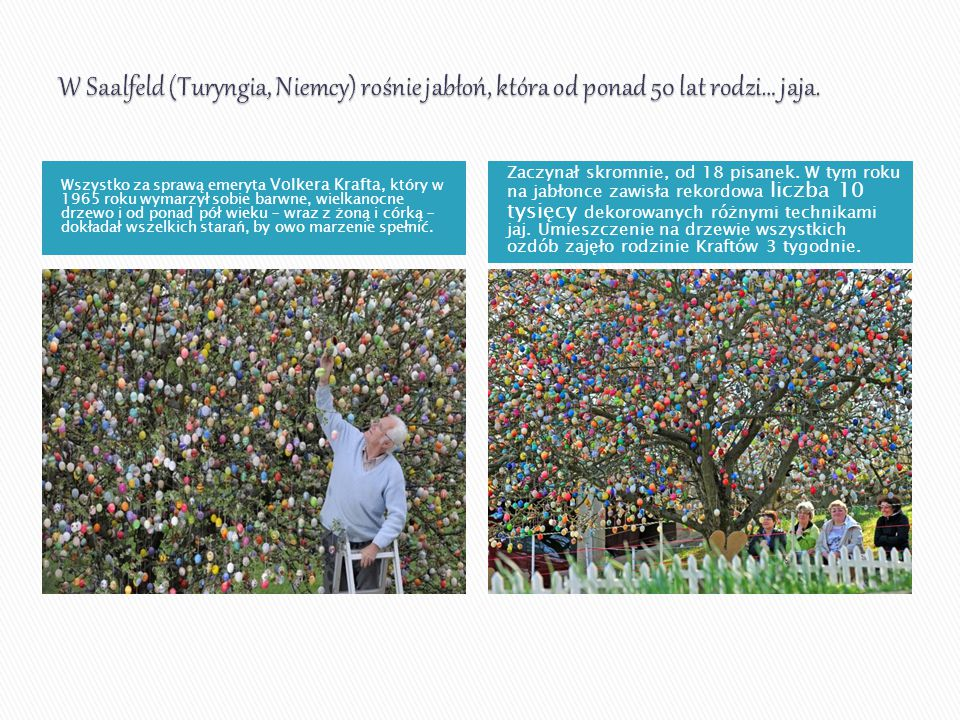 W Saalfeld (Turyngia, Niemcy) rośnie jabłoń, która od ponad 50 lat rodzi… jaja.