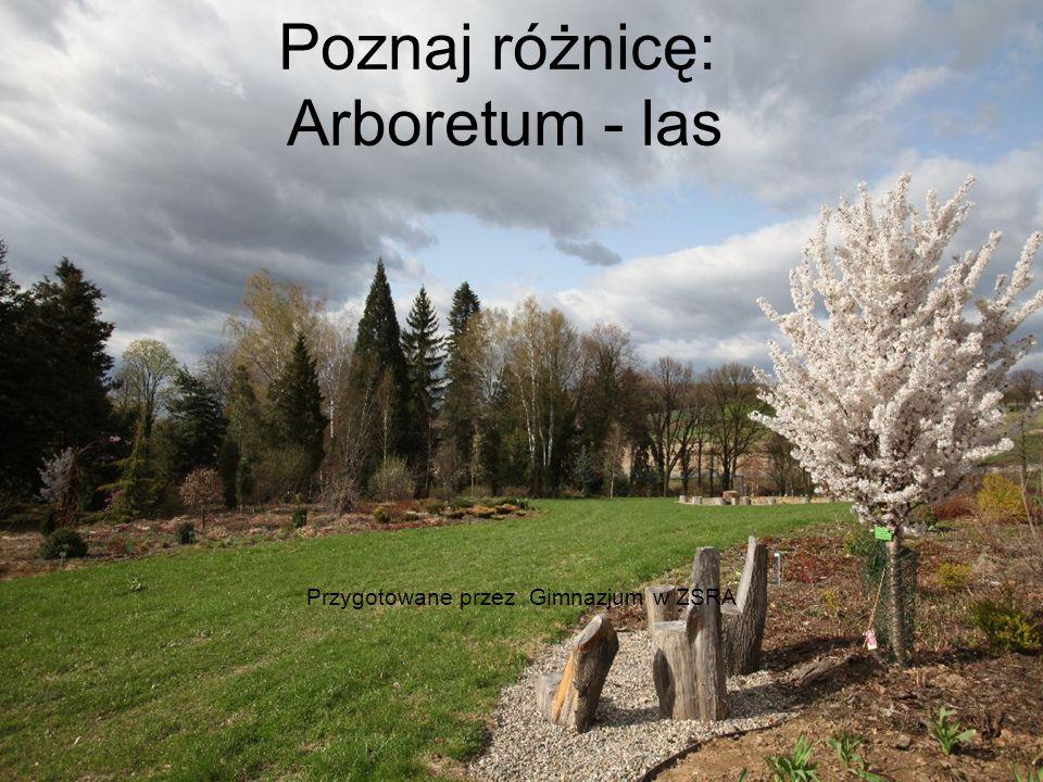 Poznaj różnicę: Arboretum - las