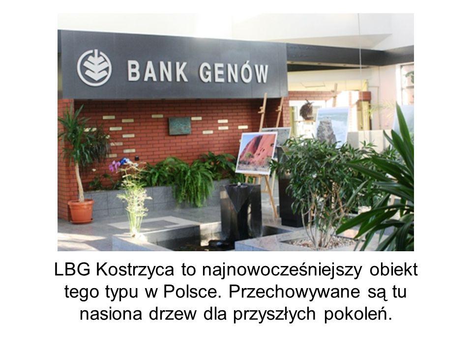 LBG Kostrzyca to najnowocześniejszy obiekt tego typu w Polsce