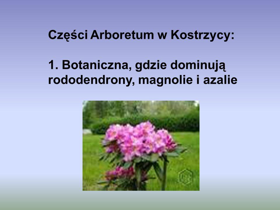 Części Arboretum w Kostrzycy: