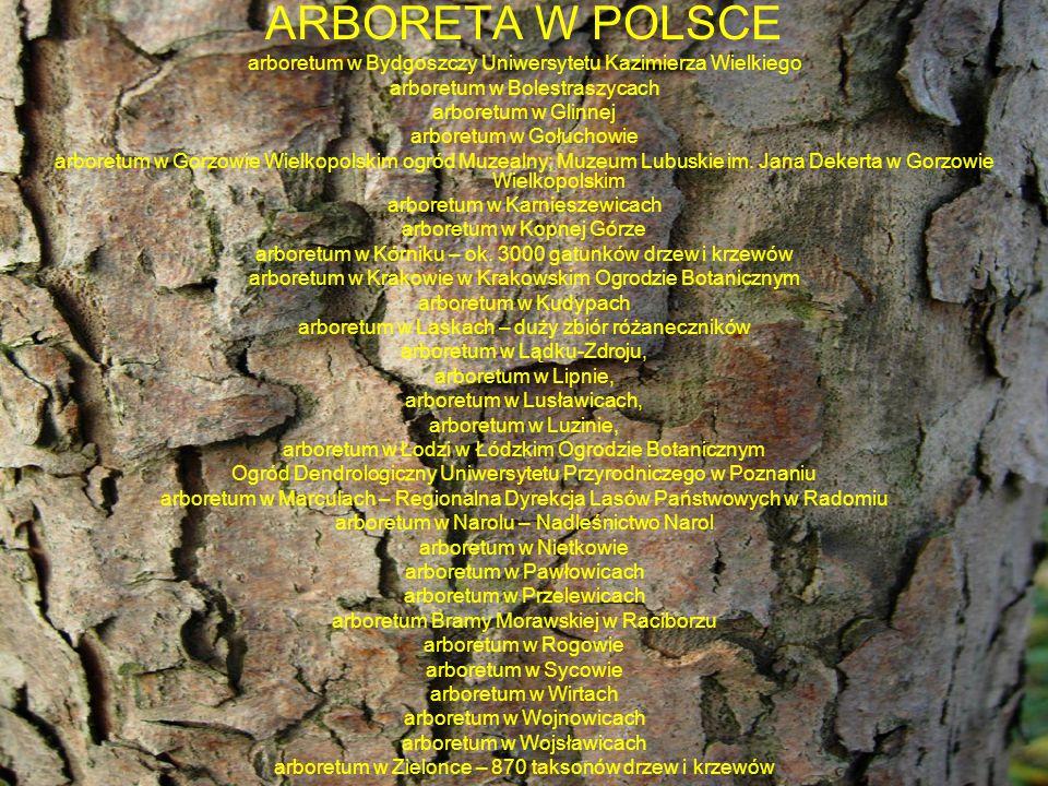 ARBORETA W POLSCE arboretum w Bydgoszczy Uniwersytetu Kazimierza Wielkiego. arboretum w Bolestraszycach.