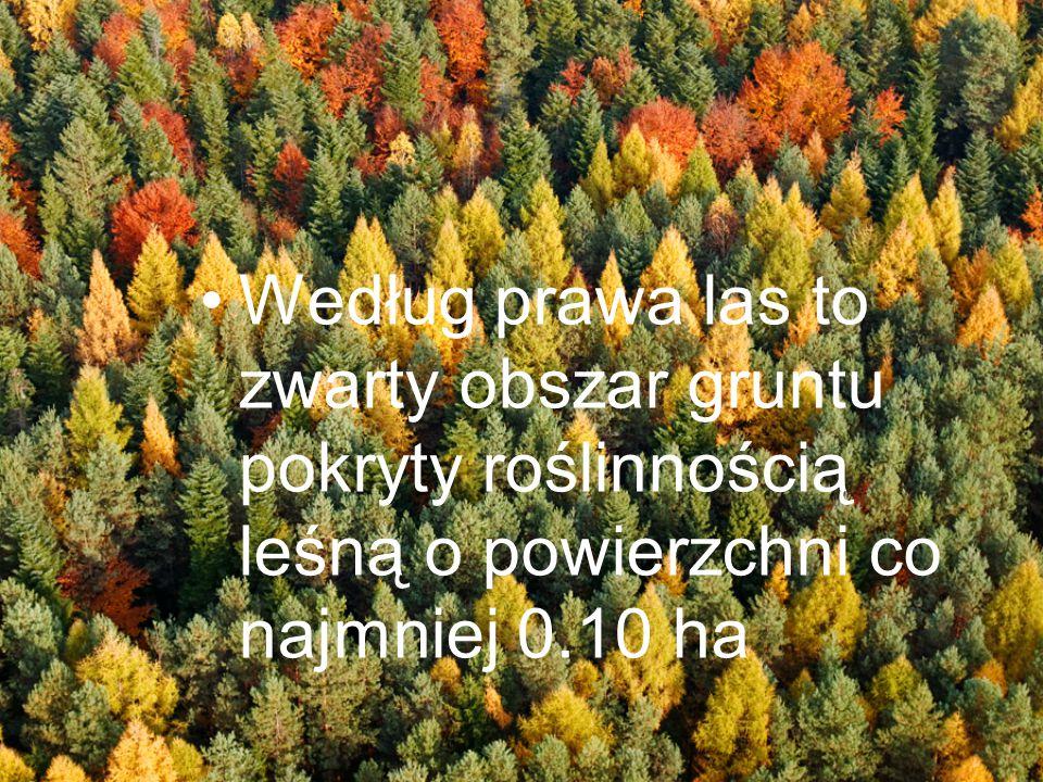 Według prawa las to zwarty obszar gruntu pokryty roślinnością leśną o powierzchni co najmniej 0.10 ha