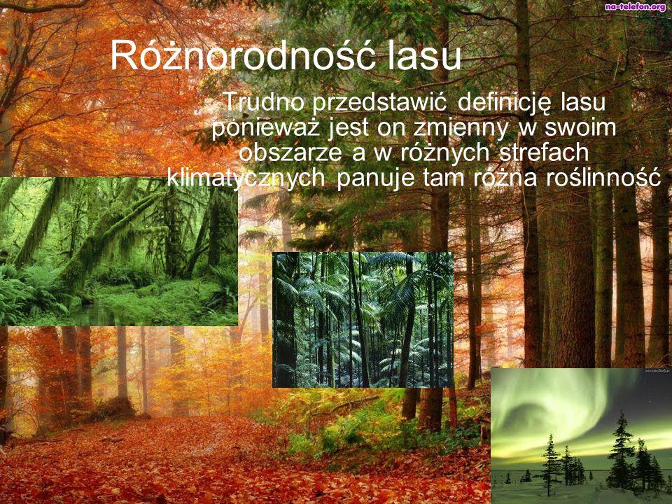 Różnorodność lasu