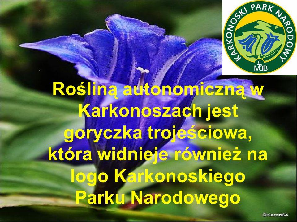 Rośliną autonomiczną w Karkonoszach jest goryczka trojeściowa, która widnieje również na logo Karkonoskiego Parku Narodowego