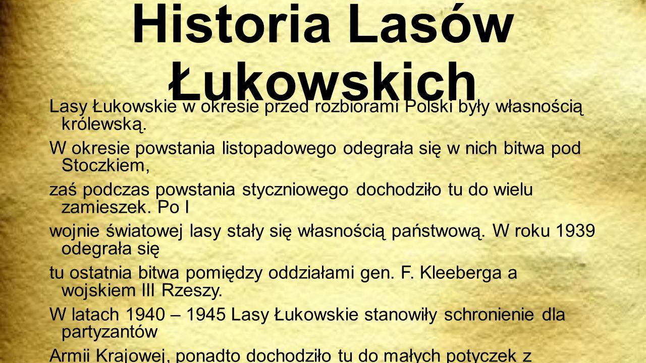 Historia Lasów Łukowskich