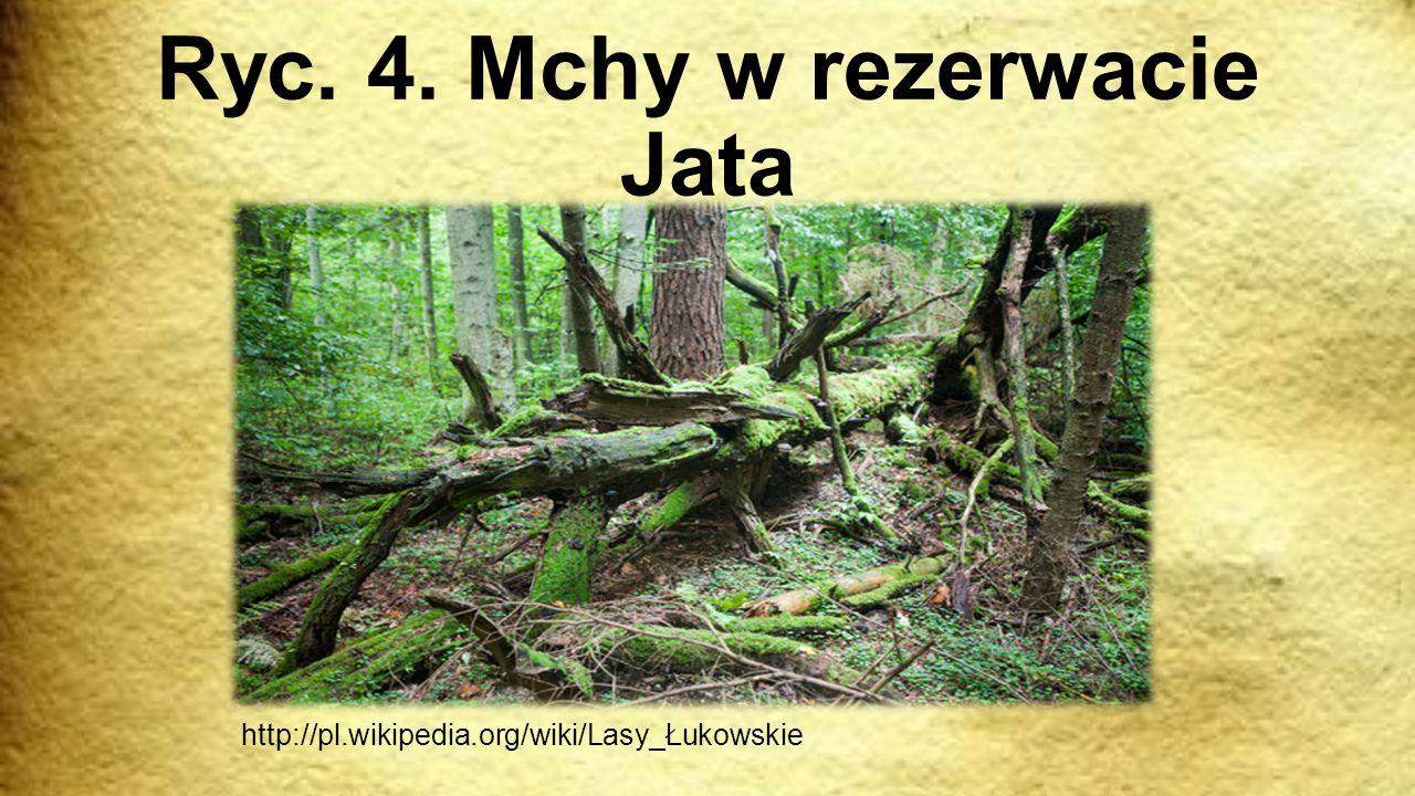 Ryc. 4. Mchy w rezerwacie Jata