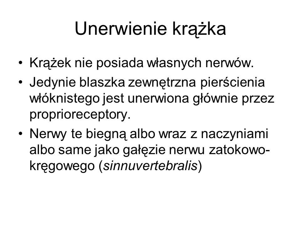 Unerwienie krążka Krążek nie posiada własnych nerwów.
