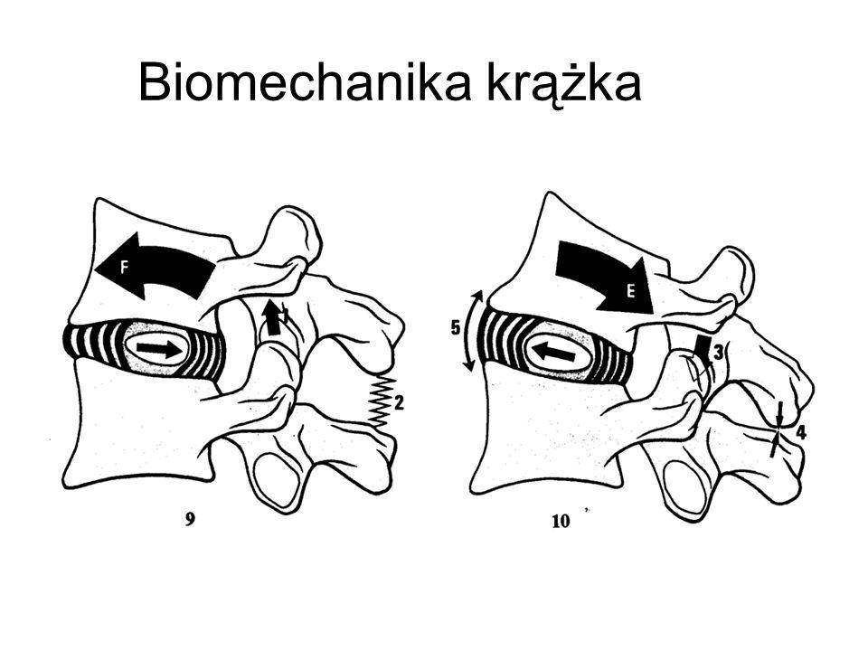 Biomechanika krążka