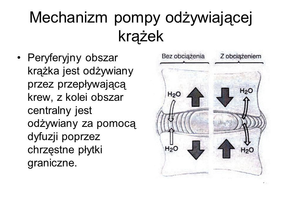 Mechanizm pompy odżywiającej krążek