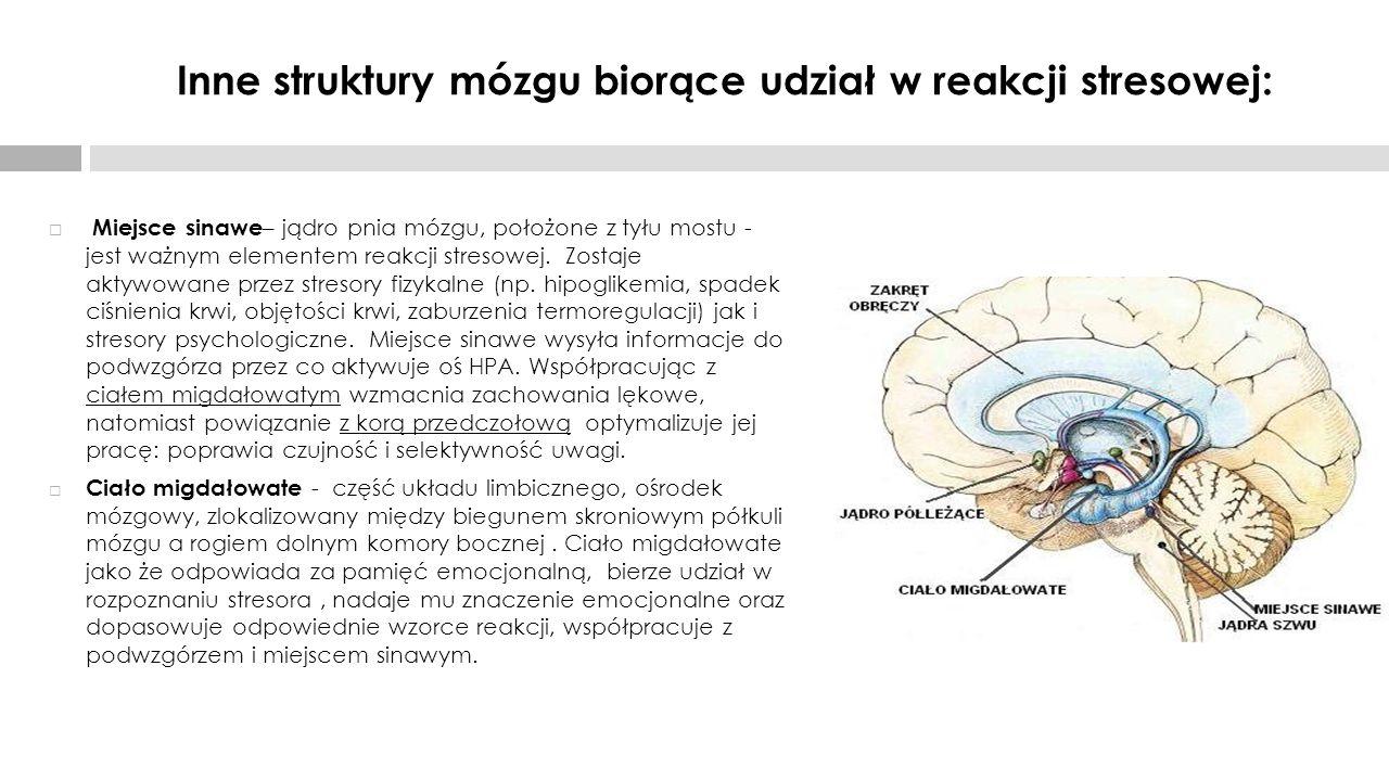 Inne struktury mózgu biorące udział w reakcji stresowej: