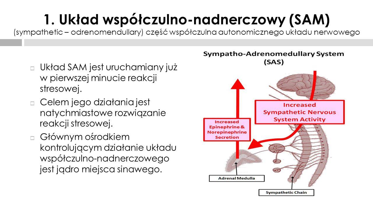 1. Układ współczulno-nadnerczowy (SAM) (sympathetic – odrenomendullary) część współczulna autonomicznego układu nerwowego
