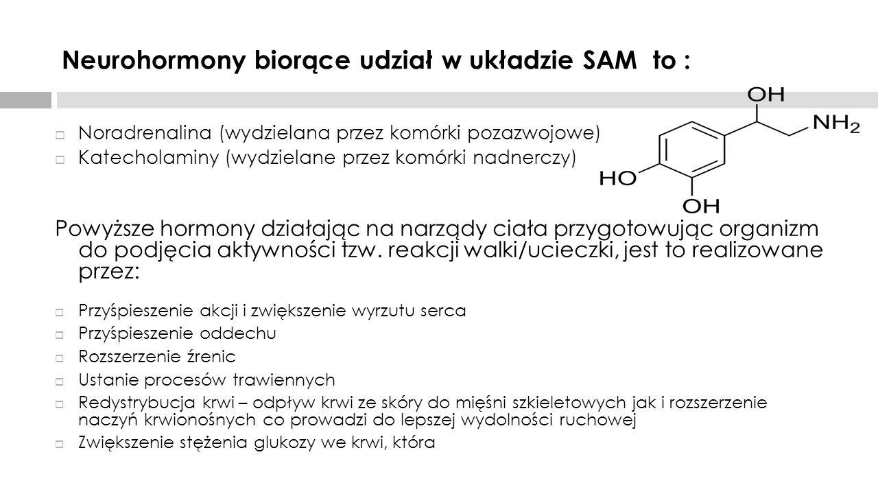 Neurohormony biorące udział w układzie SAM to :