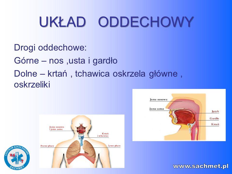 UKŁAD ODDECHOWY Drogi oddechowe: Górne – nos ,usta i gardło