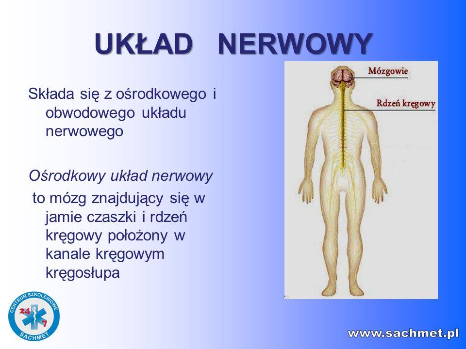 UKŁAD NERWOWY Składa się z ośrodkowego i obwodowego układu nerwowego